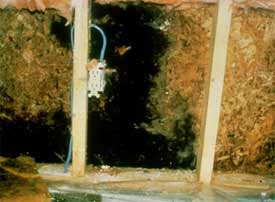 Photo showing mold growth behind a wall