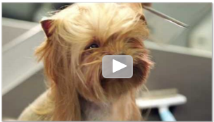 Pooch Video thumbnail